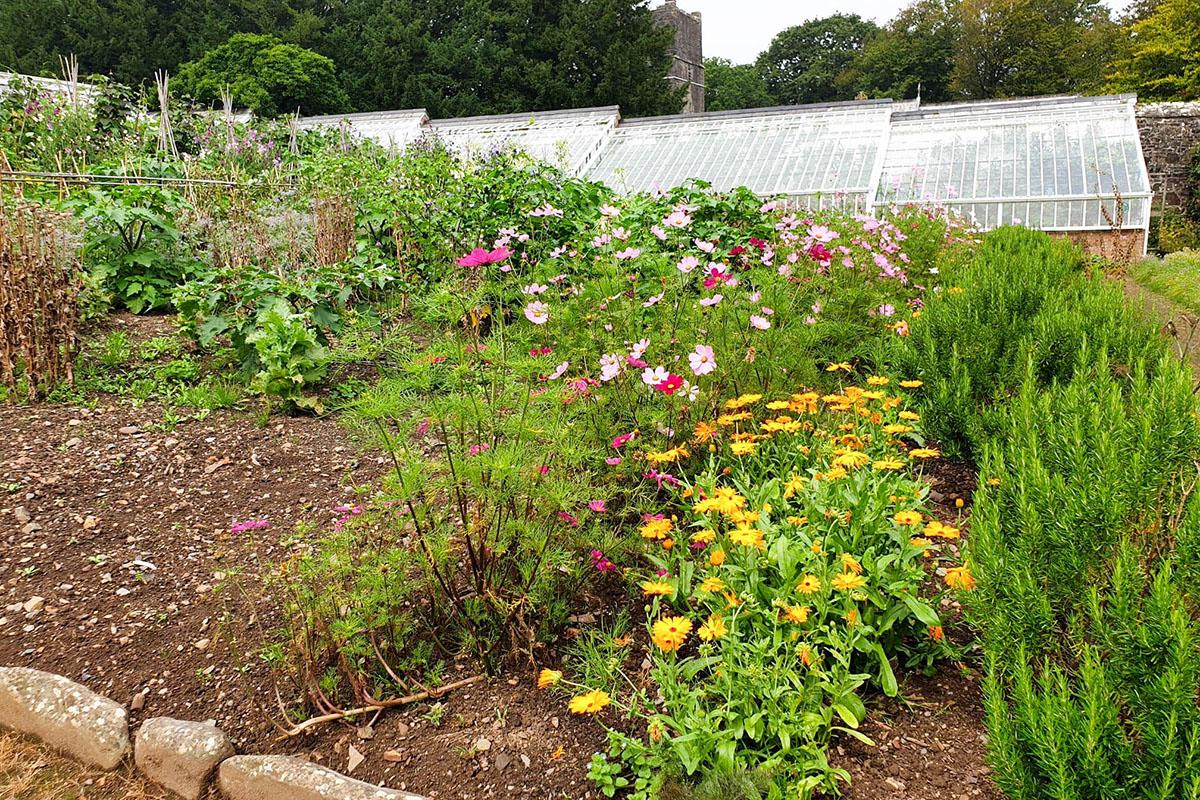 Gardens in Clovelly, North Devon