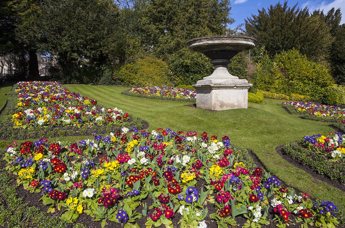 Beautiful flowers in Bath, Somerset