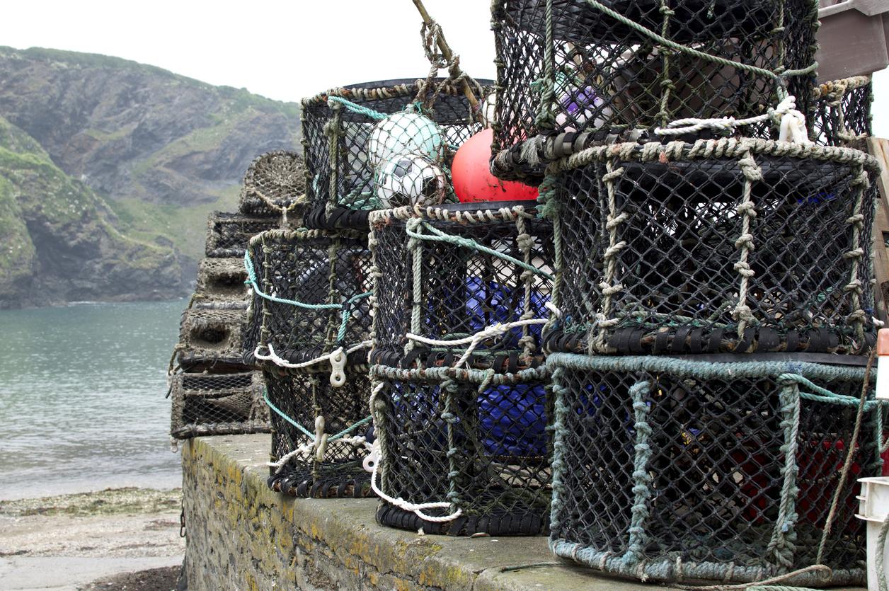 lobster pots port isaac
