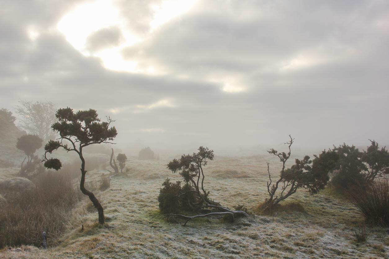 Eerie Bodmin Moor, near Bodmin, Cornwall