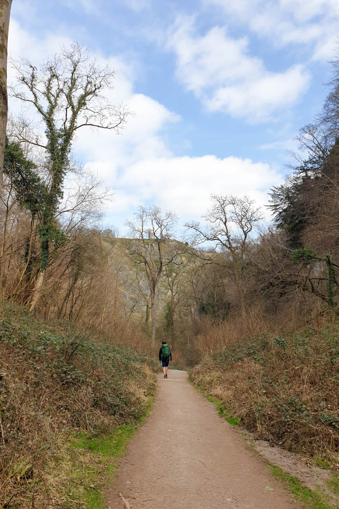 Leigh Woods Hike