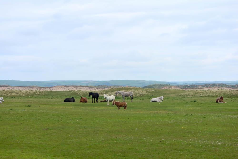Horses in Northam Burrows