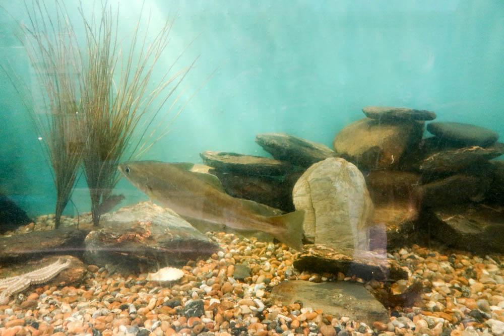 Mevagissey Aquarium inside