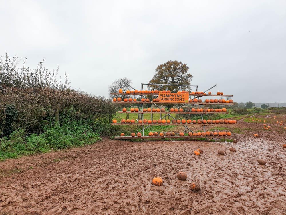 Farrington's pumpkin festival