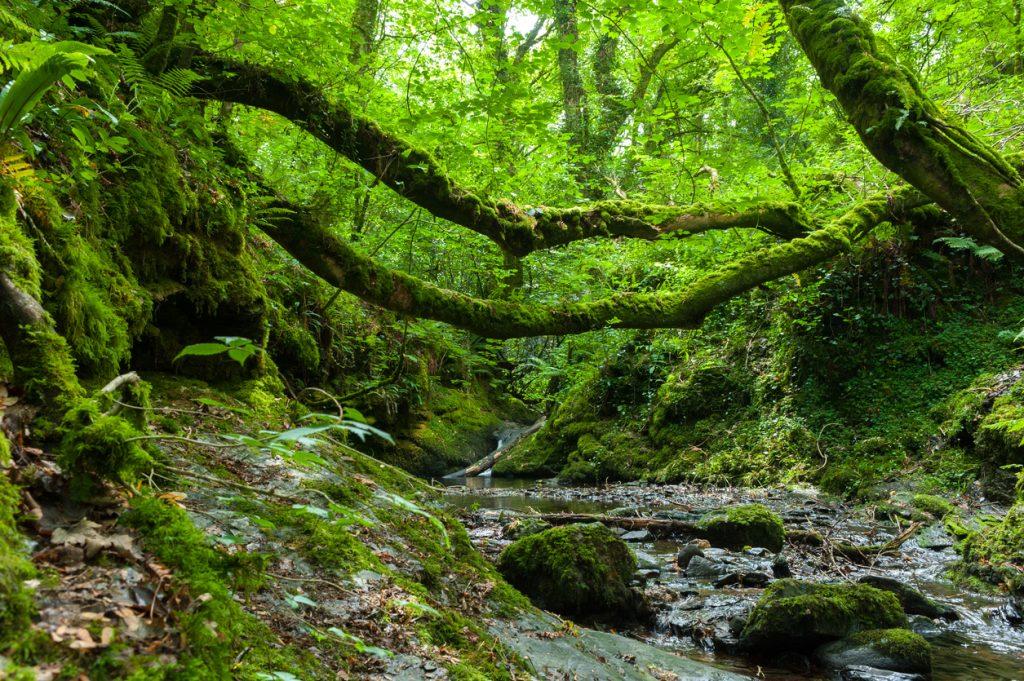 Forest in the Lydford Gorge Natural Reserve, Devon, UK